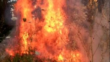 incendio monte Artemisio